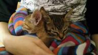 Dwa małe kotki szukają domu