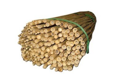 Tyczka bambusowa 90cm 10 szt BAMBUS PODPORA MOCNA