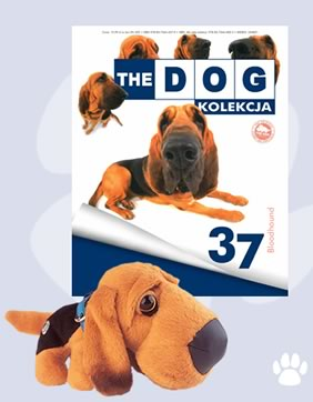 Kolekcja The Dog 37 Bloodhound 6908400880 Oficjalne Archiwum Allegro