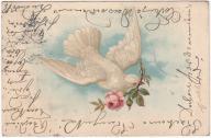Ptaki gołąb (1904)