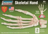 Model plastikowy Lindberg - Szkielet ludzkiej ręki