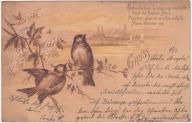 Ptaki wróble (ok. 1900)