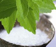 ZDROWA STEWIA - Naturalny słodzik -Stevia SADZONKA