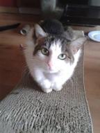 Anielka, kotka z wyrwanym ogonem prosi o pomoc
