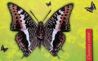 Karta telefoniczna pełna 29K - Świat owadów