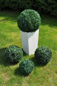 Kula Bukszpan 50 Cm Dekoracja Ogród 6311629221